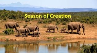 bush-elephant-africa-season-creation-700
