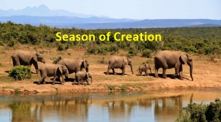 bush-elephant-africa-season-creation-700