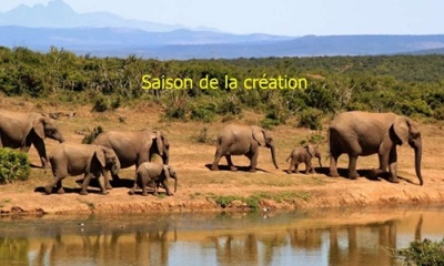 bush-elephant-africa-2-500